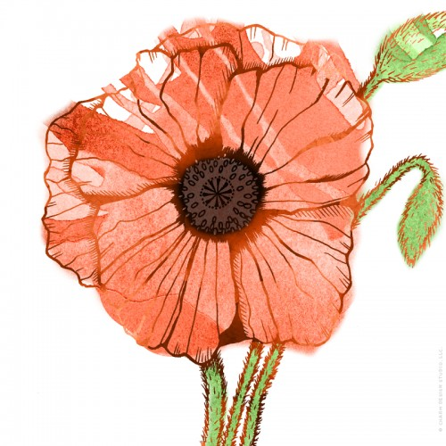 Garden Sunshine poppy illustration by Charm Design Studio