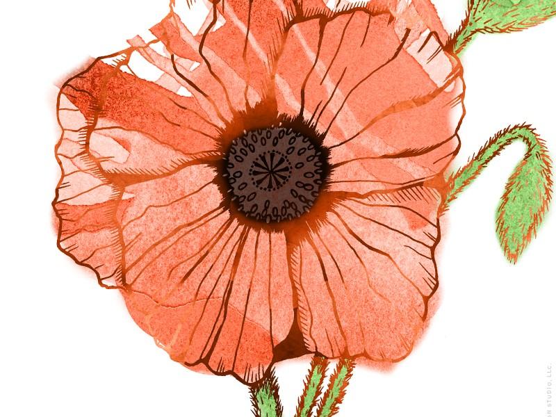 Garden Sunshine poppy illustration by Charm Design Studio