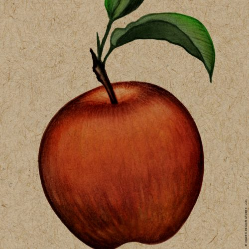 Charm Design Studio / Farmers' Market Apple, detail
