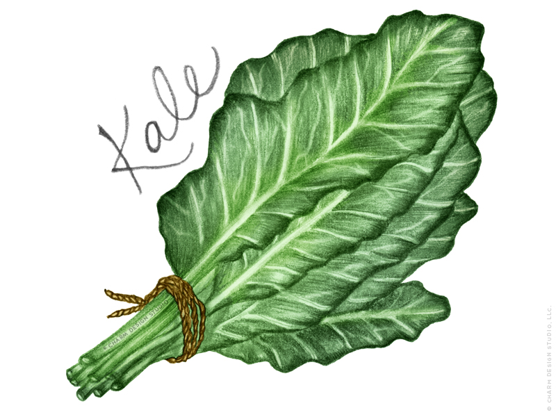 Kale illustration in the Farmers' Market design by Charm Design Studio