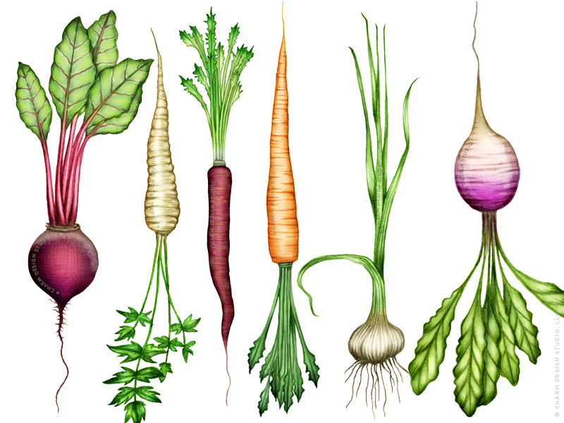 Root vegetable illustrations in the Farmers' Market design by Charm